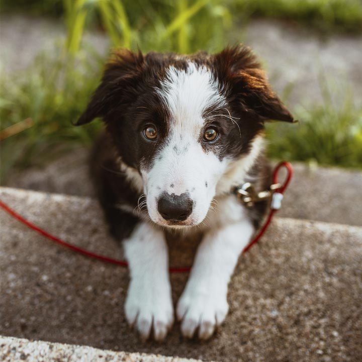seguro mascotas ja seguros